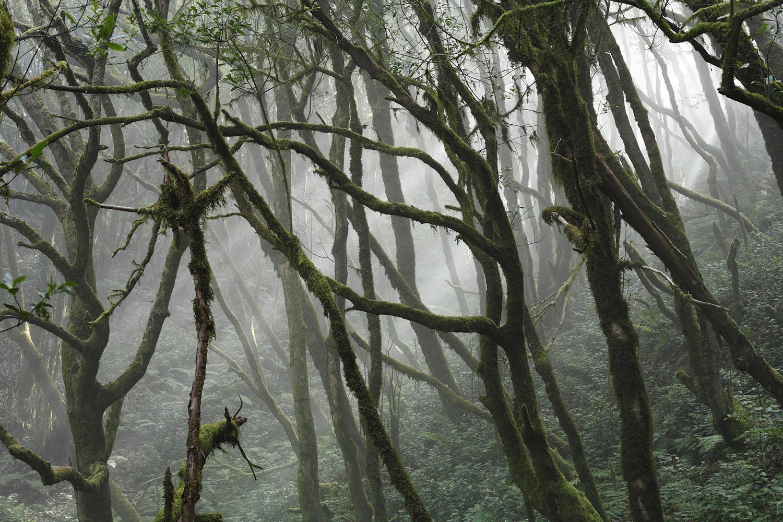 Parque Nacional de Garajonay: paisajes entre la niebla