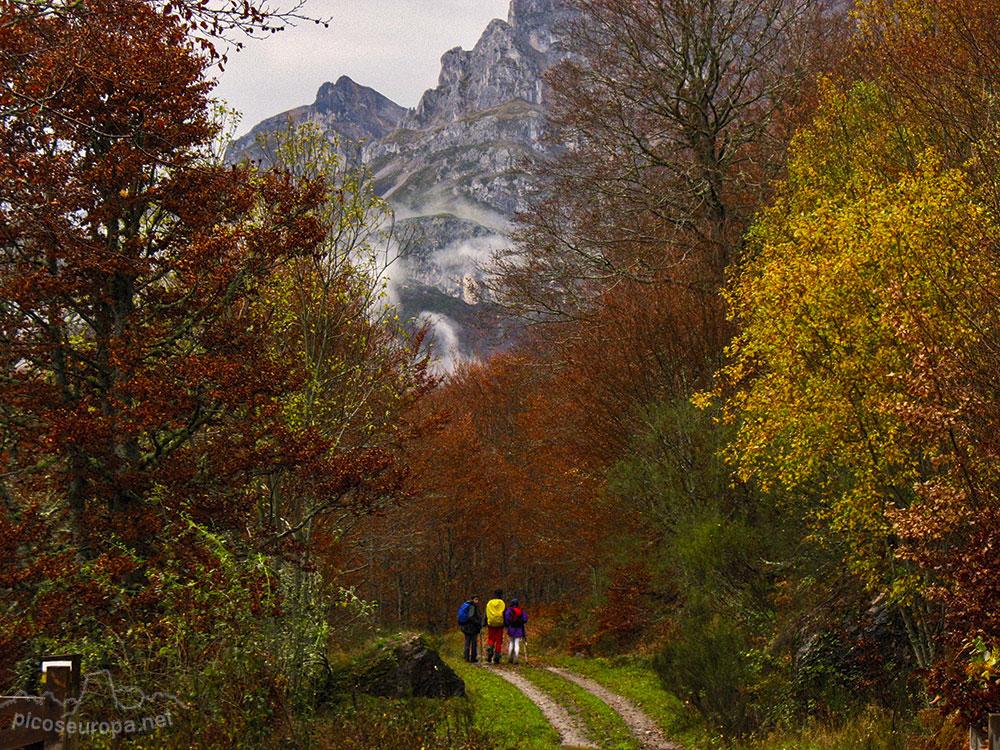 Picos de Europa: de los bosques a las cumbres
